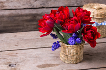 Red tulips and blue muscaries flowers in bucket on aged textured  background.