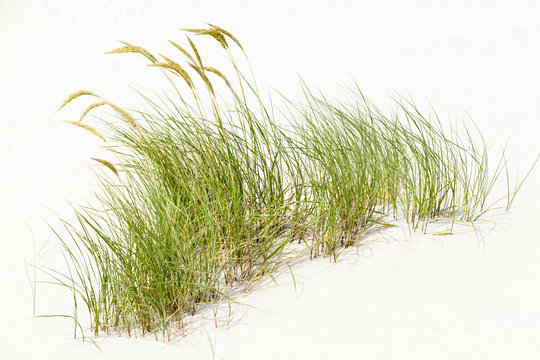 Tuft Of Grass In White Sand