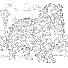 Rough Collie dog. Shetland Sheepdog or Sheltie. Coloring Page. Colouring picture. Adult Coloring Book idea.