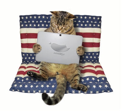The cat with a laptop sits on an inflatable mattress. White background.
