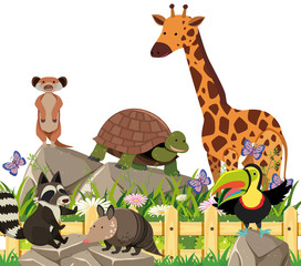 A Set of Exotic Animals