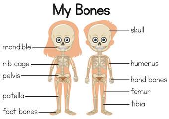 My bones diagram with two children
