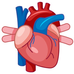A Cartoon of Human Heart