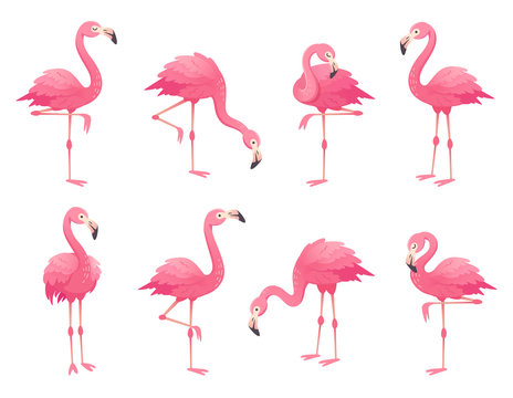 Exotic pink flamingos birds. Flamingo with rose feathers stand on one leg. Rosy plumage flam bird cartoon vector illustration