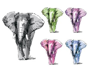 Set of sketch elephants.