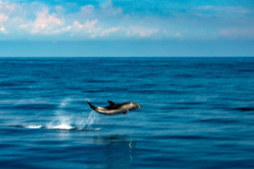Move effect on Dolphin while jumping in the deep blue sea