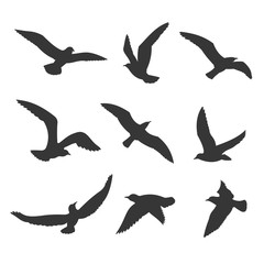 Flying birds silhouette vector set. Seagull figures in the sky, isolated on white background