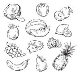 Vector drawing of various fruits