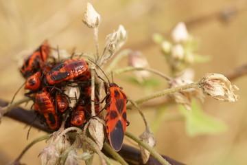 pretty company of orange beetles on a field flower