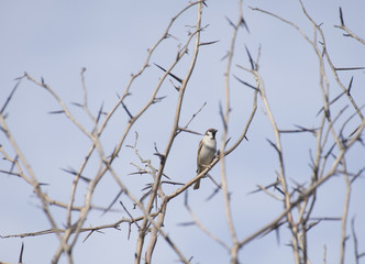 birds on thorny branches