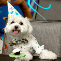 Happy puppy having a birthday party with cupcake