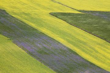 i colori di castelluccio di norcia durante la fioritura