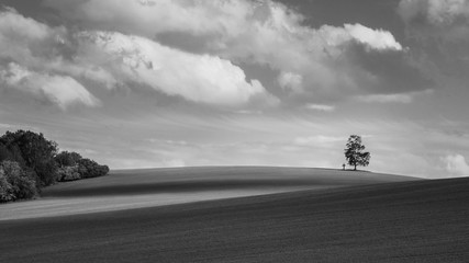Black and white landscape with alone birch on the horizon. Betula. Scenic melancholy background. Solitary tree and christian cross in undulating field. Dramatic cloudy sky. South Bohemia, Europe.