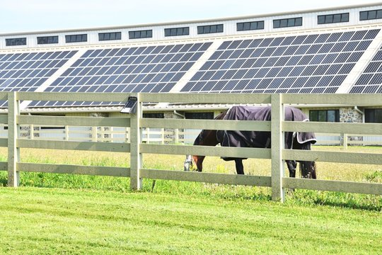 Horse and Solar Panels