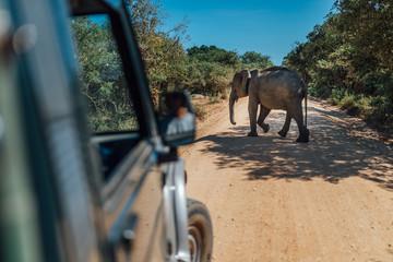 Elephant walk by yellow sand road srilanka