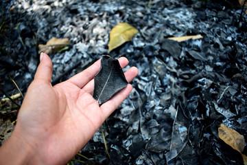 Mano con hojas quemadas por el fuego en un bosque