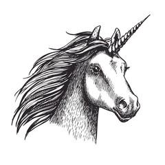 Unicorn vector sketch mystic magic horse