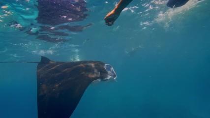 Fototapete - A big ray swimming among peolple in ocean water