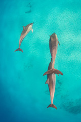 Dolphins swimming away