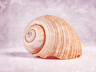 A large seashell with scratches in a vintage style.