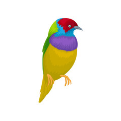 Detailed vector portrait of gouldian finch. Exotic bird with bright-colored feathers and little beak. Wildlife and fauna theme