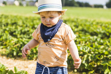baby with straw hat picking strawberries in a strawberries field