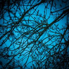 Branches nues sur fond de ciel bleu
