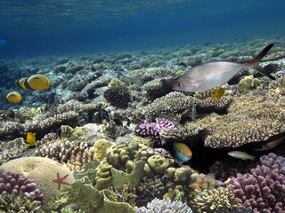 Photo of a tropical Fish on a coral reef.