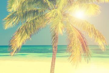Sunny beach with palm tree, Cayo Levisa, Cuba
