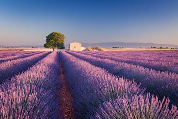 Türaufkleber Lavendel Campi di Lavanda in Provenza, Francia
