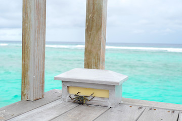 Summer concept , Small mini crab walk on terrace  beneath turquoise sea color at maldives on the weekend holidays