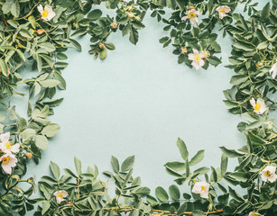 Frame of Dog-roses with white flowers on light blue background, top view