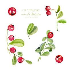 Watercolor cranberry berries illustration collection, hand painted isolated on a white background