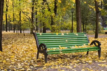 Autumn park with fallen orange leaves on the ground