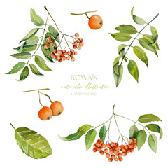 Watercolor rowan berries illustration collection, hand painted isolated on a white background