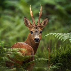 portrait of deer in the woods