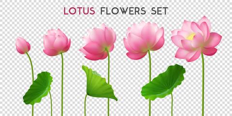 Lotus Flowers Realistic Set