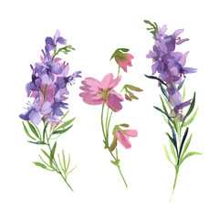 Watercolor green branch with pink and purple wildflower