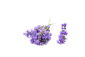 Fresh bunch of lavender flowers on a white background.
