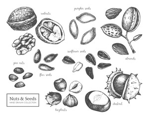 Vector collection of hand drawn seeds and nuts sketches. Walnut, hazelnut, almond, chestnut, pine nut, sunflower, pumpkin, flax seeds drawings. Healthy food elements collection