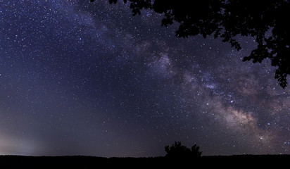 Silhouette of tree branches against the background of the milky way