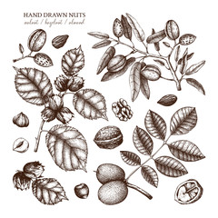 Vector collection of hand drawn nuts sketches. Vintage illustrations of walnut, hazelnut and almond. Botanical leaves, fruits, nutshells for packaging, branding, prints, cards design.