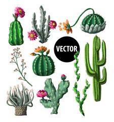 Cacti with flowers isolated on a white background. Vector illustration.