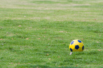 yellow football on green grass in park, yellow soccer ball on ground