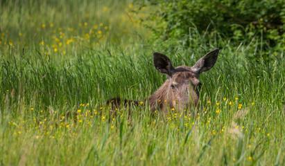 Moose spring park