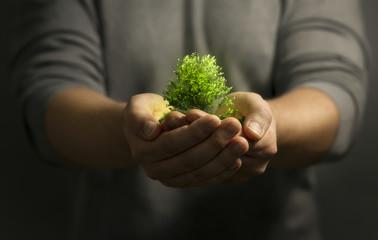 Baum wird schützend in Händen gehalten