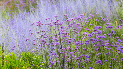 Sfondo Fiori Viola Lavanda Farfalle Stock Photo And Royalty Free