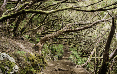 sloping forest
