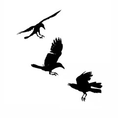 Three flying crows, silhouette isolated