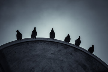 Doves sit on the edge of roof